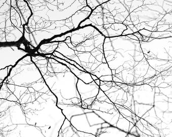 Tree Print,  Large Wall Art, Tree Branches, Tranquil,  Home and Office Decor, Tree Photo, Black and White Decor, Bare Branches Tree Picture