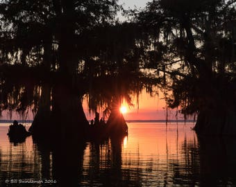 Louisiana Cypress Swamp Sunset