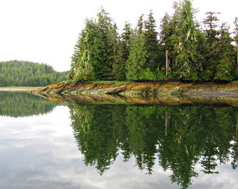 Forest Reflection - 11x14 Alaska Scenic Photography - Ocean and Forest Reflection