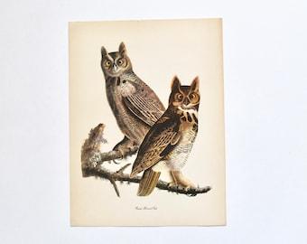 Vintage 1940s Bird Book Illustration Lithograph Print of Great Horned Owl- Birds of Prey/Raptors