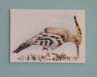 Hoopoe aceo,  original watercolor painted in South Africa