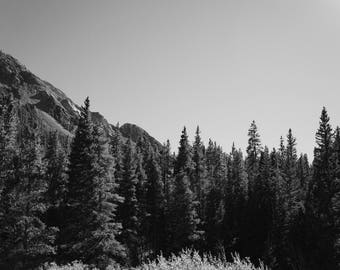 Fine Art Photography | Reaching Trees Black and White  Print | Wall Art
