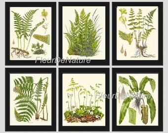 FERN Print SET of 6 Botanical Art Print 8X10 Lindman Antique Green Ferns Roots Chart Forest Summer Plant Nature to Frame Home Decor Garden