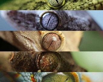 Gecko Eyes Print