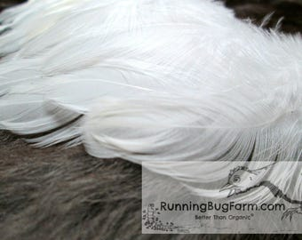"""White Feathers Cruelty Free Feathers Real Feathers Craft Feather Loose Feather Natural Feather Real Bird Feathers For Crafts Qty 25 3-3.5"""""""