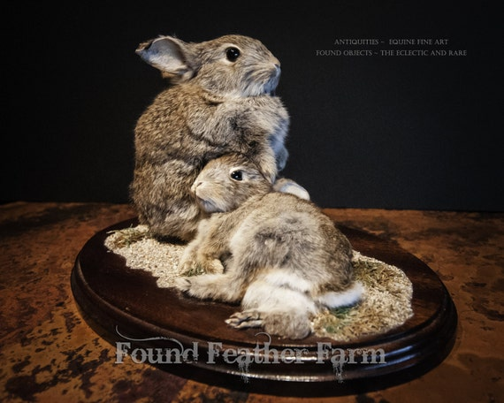Vintage English Taxidermy of Two Young Rabbits Mounted on a Wooden Base
