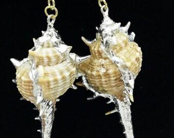 Silver Trimmed Murex Shell Earrings