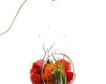 Air Plant Terrarium with Geode Crystal / Sunburst On Ice