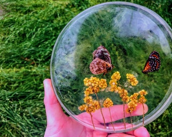 """5"""" Round Resin Cast Nature Display, Preserved Naturally Passed Butterfly & Pressed Botanicals, Home Decor"""