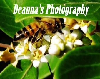 Pollonation de abeja por Deanna Bernal