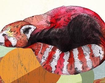 Red Panda //  print 5x8 (A5)