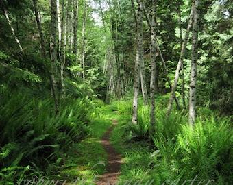 Fine Art Photograph - Forest Path