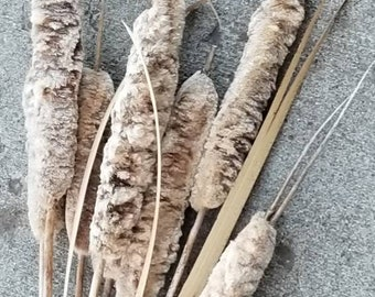 CATTAILS Bunch of 6 real cut and Naturally dried by Late Summer Heat  Wedding Floral Cattial bunch Fall Floral Arrangements Halloween