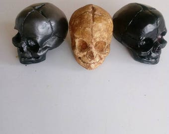 Fetal Skull with jaw