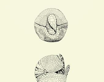 Armadillo-Ball