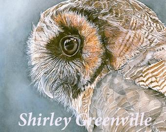 Owl - Original watercolor print