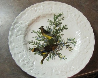 Audubon Society Birds of America Plate -  Cedar Bird - #43