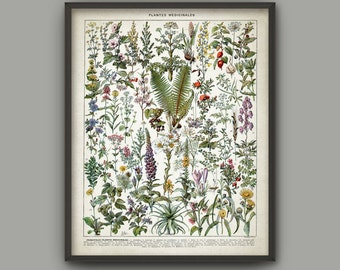 Medicinal Plants Print - Herbalism Plant Decor - Ethnobotany - Healthcare - Herb Remedies - Green Plant Decor - French Book Plate - AB682