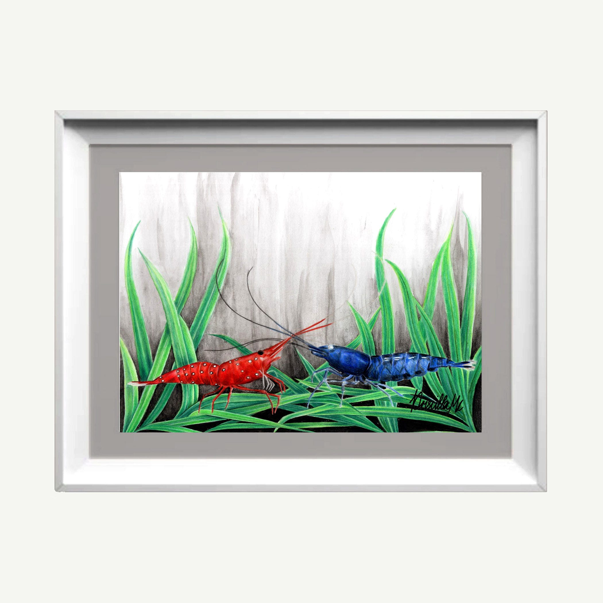 Cardinal & royal blue shrimp Hand signed Art print Ciclee