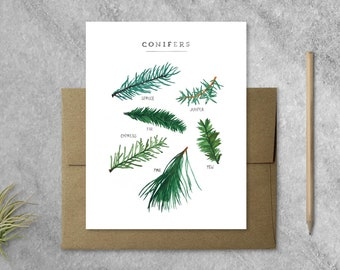 Boxed Set of 8 Evergreen Cards with Kraft Envelopes, holiday cards