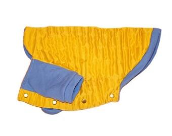 Jacket, for a dog, English and French bulldog.