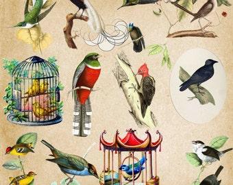 Birds Clip Art , Exotic Birds , Vintage Birds clipart , Birds Illustration , Bird clipart , Vintage Exotic Birds Clipart