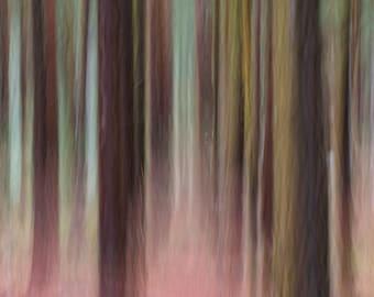 Colour impression photograph of woodland.