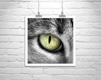 Cat Photography, Cat Picture, Cat Art Print, Cute Animals, Cat Eye Picture, Animal Photographs, Gift for Cat Lovers, Chats, Pet Photography