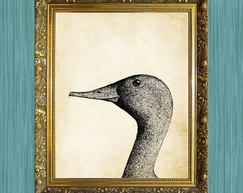 Duck Print  8 x 10  Print Natural History Print Nursery Art