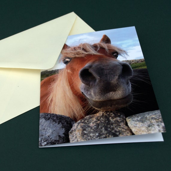 A6 Photo Greeting card of a smiling horse - BLANK