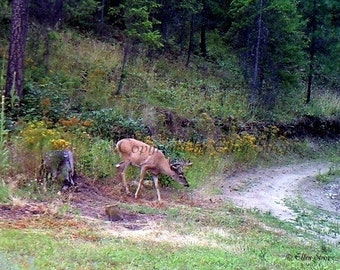 Whitetail Buck, Deer, Bucks, Deer decor, note cards, blank note card, Ellen Strope