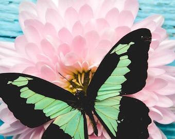 Butterfly Love 2, colorful art print, blue wall art, butterfly photograph, botanical, nature art, whimsical art, cottage decor, nature art