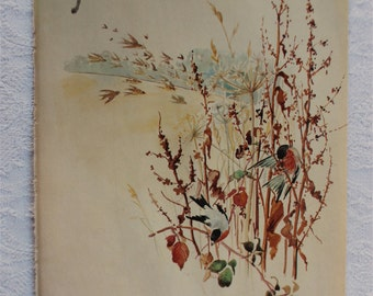 November - Vintage Botanical Book Page - Bullfinch  -  Nature Notes of an Edwardian Lady - Edith Holden -
