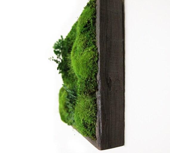 sc 1 st  Etsy & 14x14 Artisan Moss® Moss and Fern Moss Wall Art.