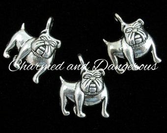 10 pewter Bulldog charms (CM34)