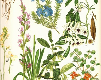 Vintage 1970 Color Art Print Wild Flowers Original Book PLATE 140 Pink Blue White Orange and Yellow Flowers wiht Seeds Roots Plants