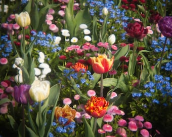 Photographic Fine Art Print of a  Colourful Flower Bed - Christmas Flowers