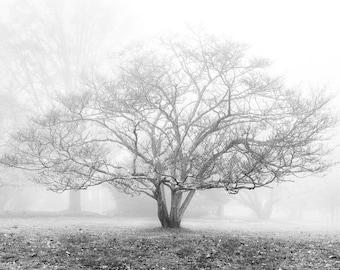 Rural Landscape Photography - Trinity Tree, Solebury, Bucks County, Pennsylvania