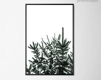Printable Pine Tree, Pine Tree Photography Print,  Nature Print, Scandinavian Winter Poster, Winter Poster, Winter Print, Winter Art