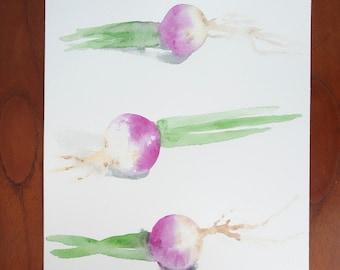 Radish watercolor / / Illustration / / wall decor / / gift / / culinary art / / kitchen poster / / vegetables