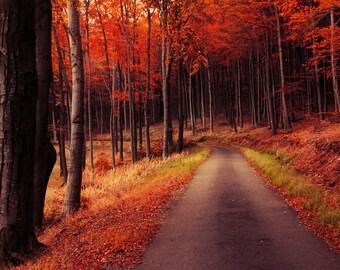 "Autumn road framed photo print - wall art - red forest - fall foliage - home decor - ""Autumn Journey XXIX."" by Zsolt Zsigmond - SKU0121"