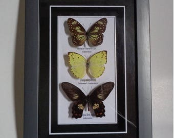3 Real butterfy in acrylic frame for home decoration, gift..