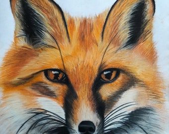 Fox Drawing, Cute Fox, Pastel Fox Drawing