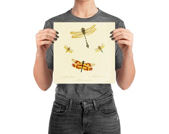 Dragonfly Poster, Natural History, 10 inch square Matte Archival Print, Room Decor