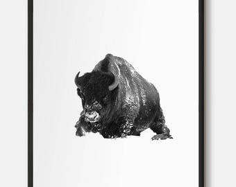 Bison, Buffalo, Buffalo Art, Bison Art, Black and white photo, Animal Photography, Animal Wall Art, Winter Art, Animal in winter, Wildlife