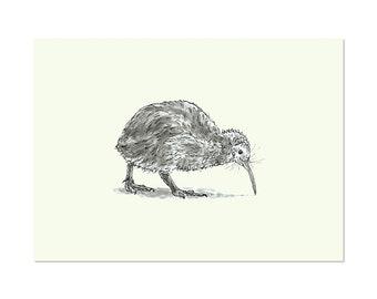 Kiwi Bird, art print 5x7 Animal Art Drawing, illustration, home decor, Nursery, wall art, postcard