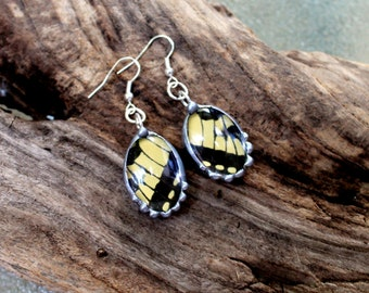 Black and Yellow Butterfly Oval Glass Domed Earrings, Eastern Tiger Swallowtail