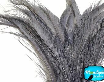 Peacock Swords, 50 Pieces - SILVER GREY Bleached Peacock Swords Cut Wholesale Feathers (bulk) : 3566