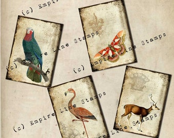 Shabby Collage Antique Style Backgrounds Instant Download Antique Print Collage with Animals and Birds