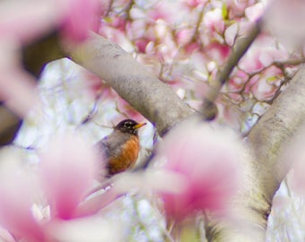 Photo of Robin in Magnolia Tree, Nature Print